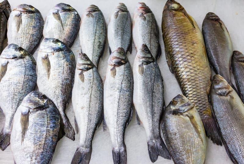 Download Verse Russische Vissen Op Ijs Bij Voedingsmiddelenmarkt 8 Stock Afbeelding - Afbeelding bestaande uit vers, vlees: 107703285