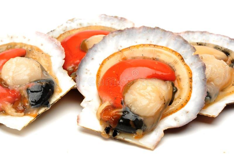 Verse ruwe kammossel met shell stock foto