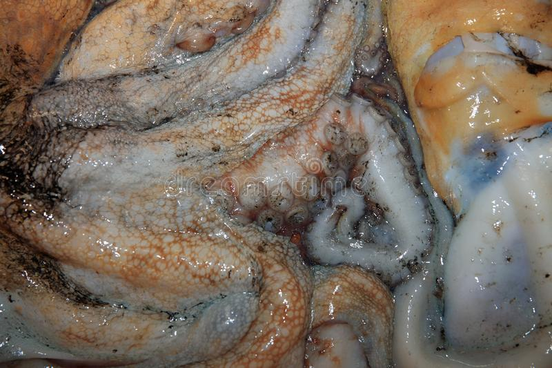 Verse ruwe Octopus op Vissenmarkt in Portugal stock foto's