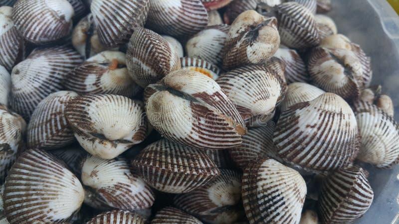 Verse ruwe overzeese kokkelsachtergrond, overzeese shells, favoriete schotel van zeevruchten royalty-vrije stock afbeeldingen