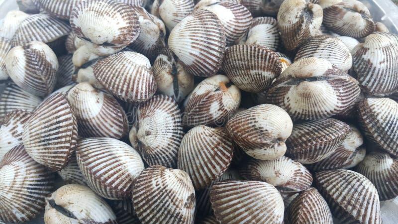 Verse ruwe overzeese kokkelsachtergrond, overzeese shells, favoriete schotel van zeevruchten stock afbeeldingen