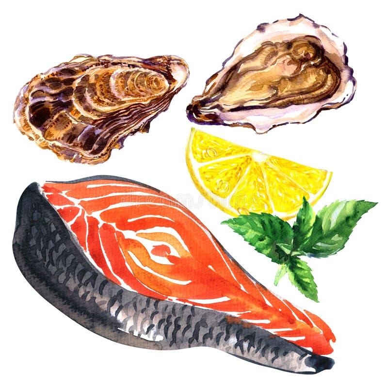 Verse ruwe plak van rode vissenzalm en oester met citroen, geïsoleerd basilicum, zeevruchten, gezond voedsel, hand getrokken wate royalty-vrije illustratie