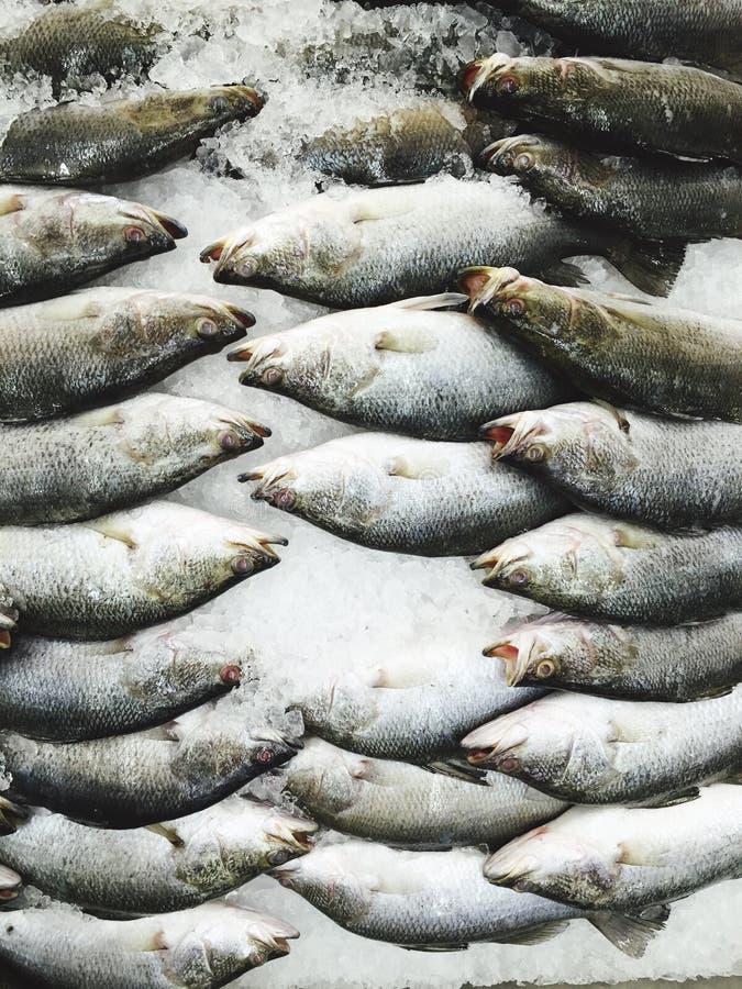 Verse ruwe vissen in de markt royalty-vrije stock foto's