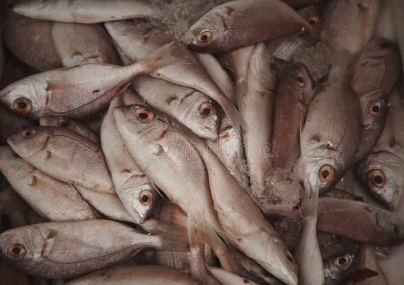 Download Verse ruwe vissen in markt stock foto. Afbeelding bestaande uit maaltijd - 54090680