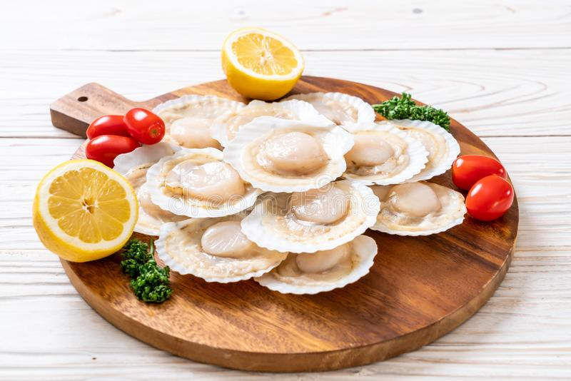 verse shell kammossel stock afbeeldingen