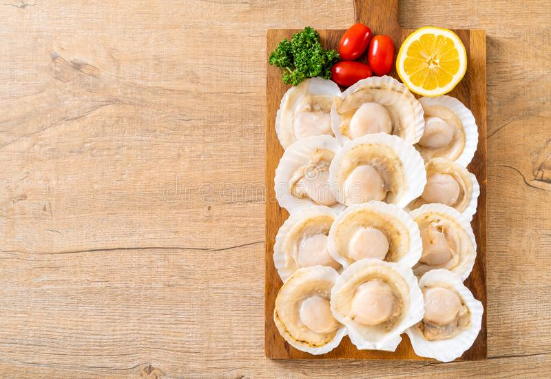 verse shell kammossel stock foto