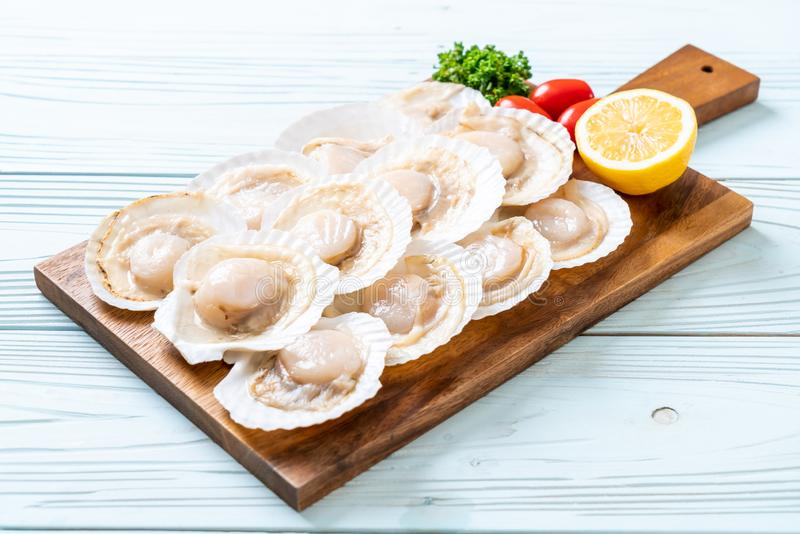 verse shell kammossel stock foto's