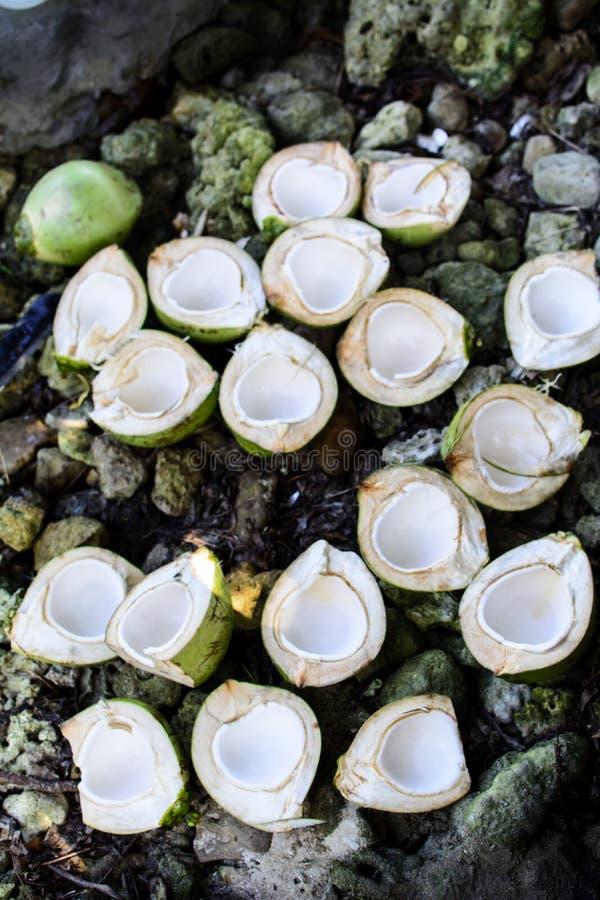 Verse shells van de Besnoeiingskokosnoot dichtbij het overzees royalty-vrije stock afbeeldingen
