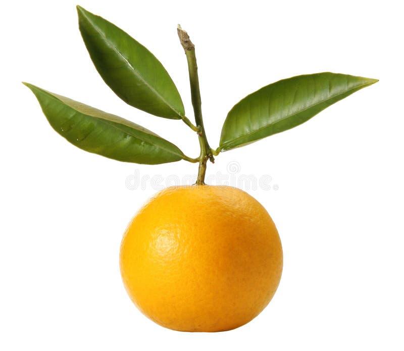 Verse sinaasappel met bladeren stock afbeelding