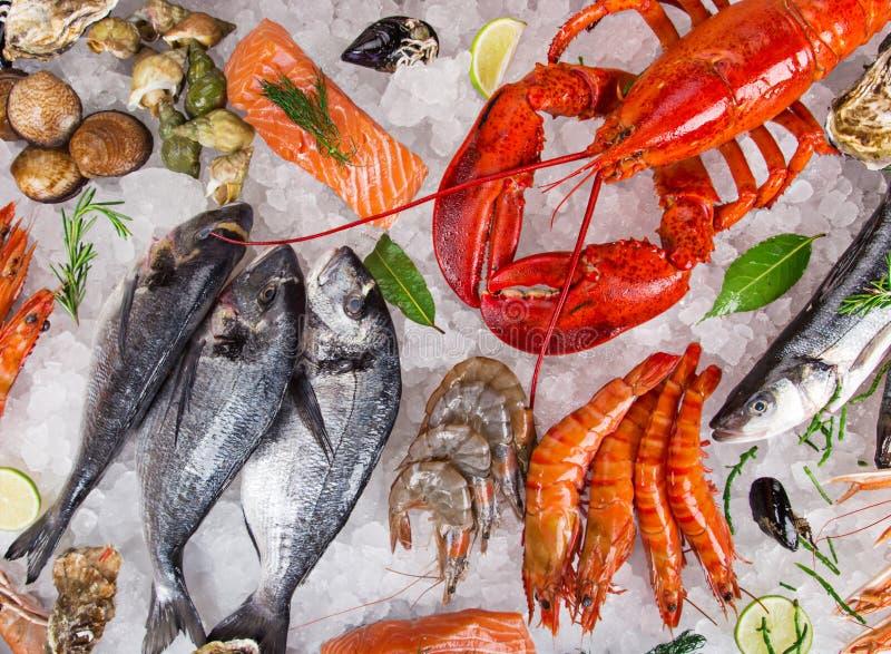 Verse smakelijke die zeevruchten op verpletterd ijs worden gediend royalty-vrije stock afbeeldingen