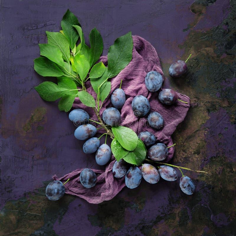 Verse, smakelijke pruimen op een tak van de tuin stock afbeelding