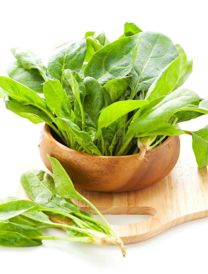 Verse spinazie stock foto