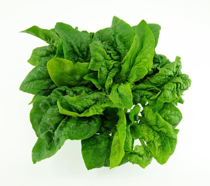 Verse spinazie stock afbeelding