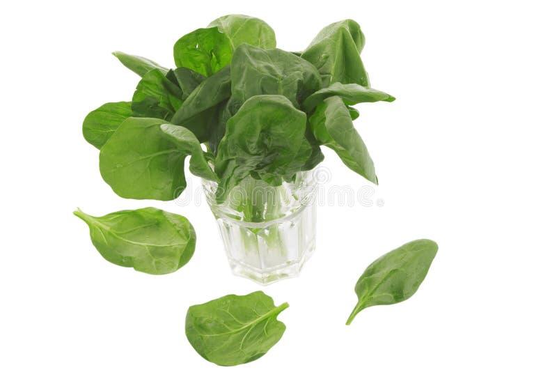 Verse spinazie in een glas stock foto's
