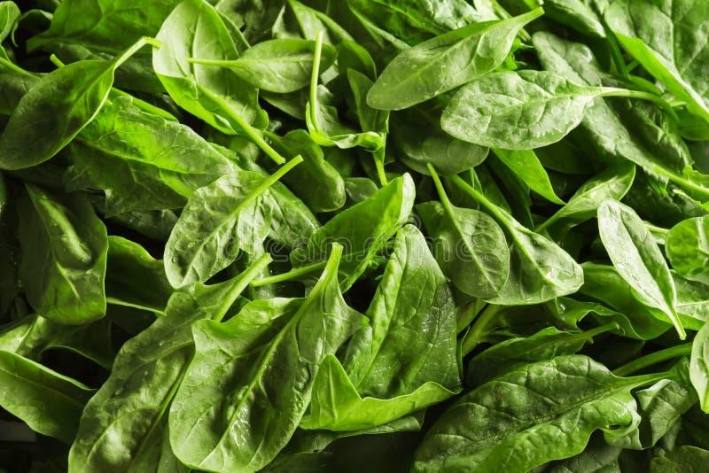 Download Verse spinaziebladeren stock foto. Afbeelding bestaande uit tuin - 107703240