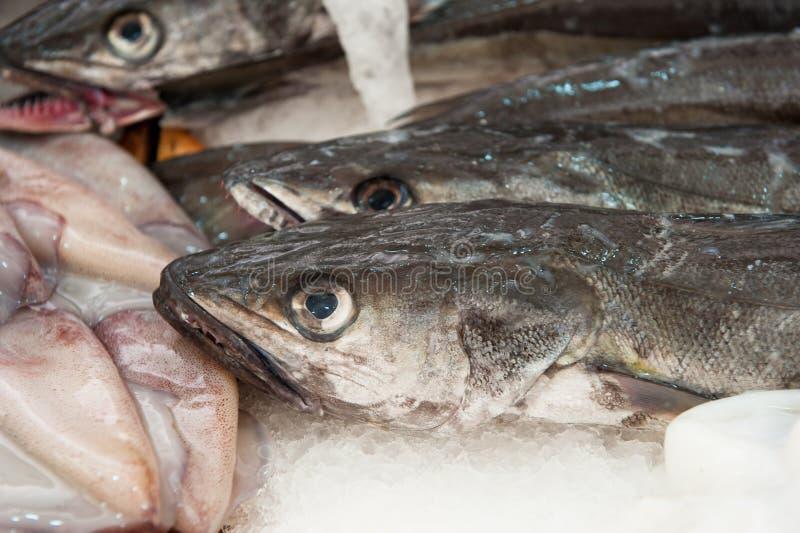 Verse stokvissen bij een vissenmarkt stock fotografie