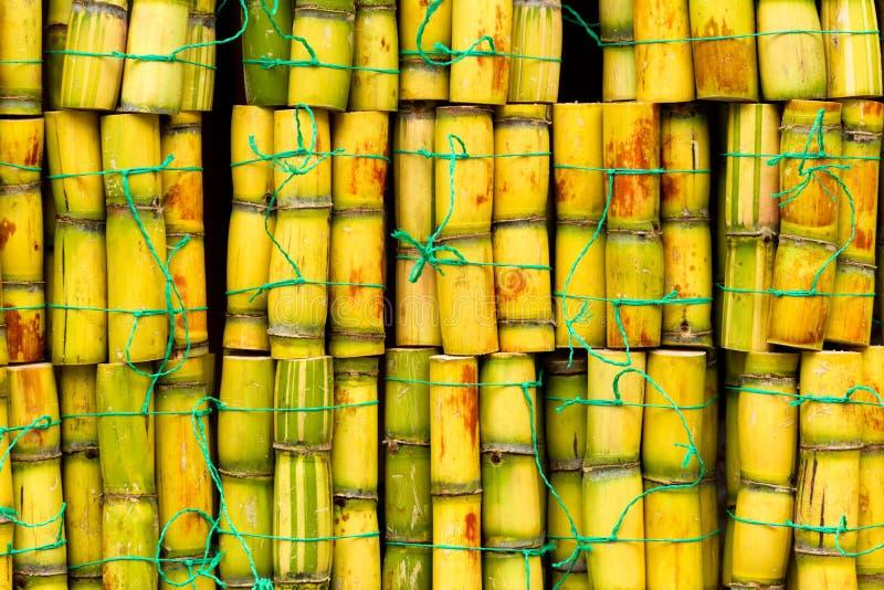 Verse suikerrietstapels royalty-vrije stock foto