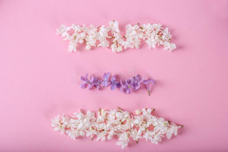 Verse takken van purpere lilac bloesems op lichte pastelkleur roze achtergrond Lege plaats voor inspirational, gelukkige teksten, stock fotografie