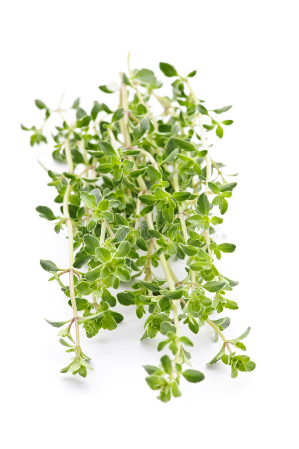 Verse thyme op witte achtergrond stock afbeelding