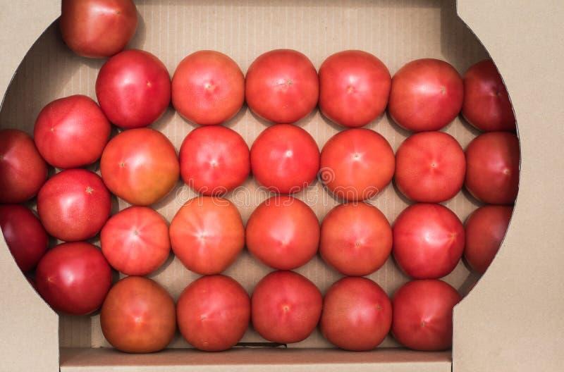Verse tomaat in doos Het organische concept van fruitproducten royalty-vrije stock afbeeldingen
