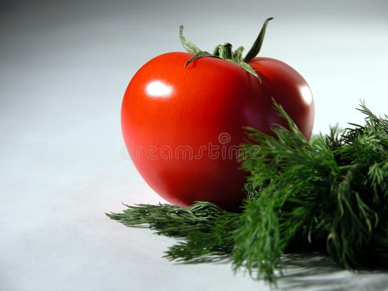 Verse tomaat en dille stock afbeelding
