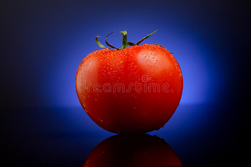 Verse tomaat op blauw stock fotografie
