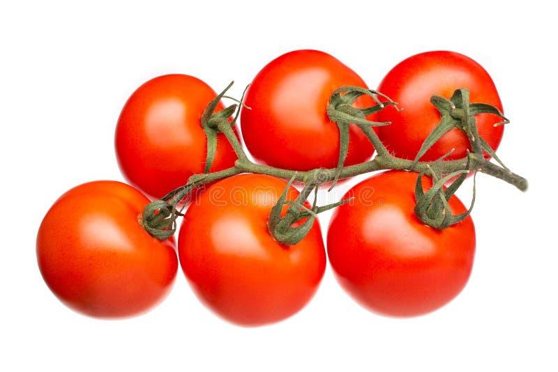 Verse tomaten op een groene die tak op witte achtergrond wordt geïsoleerd Hoogste mening stock fotografie