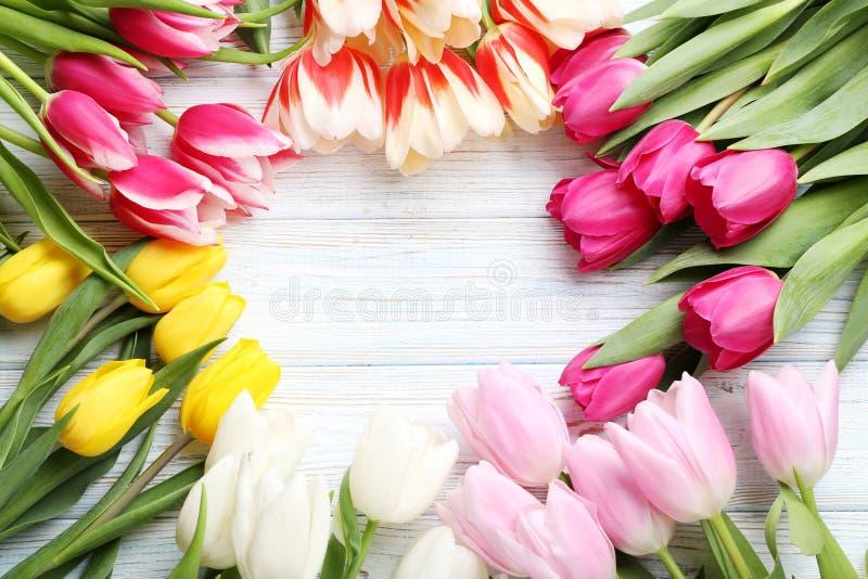 Verse tulpen royalty-vrije stock fotografie