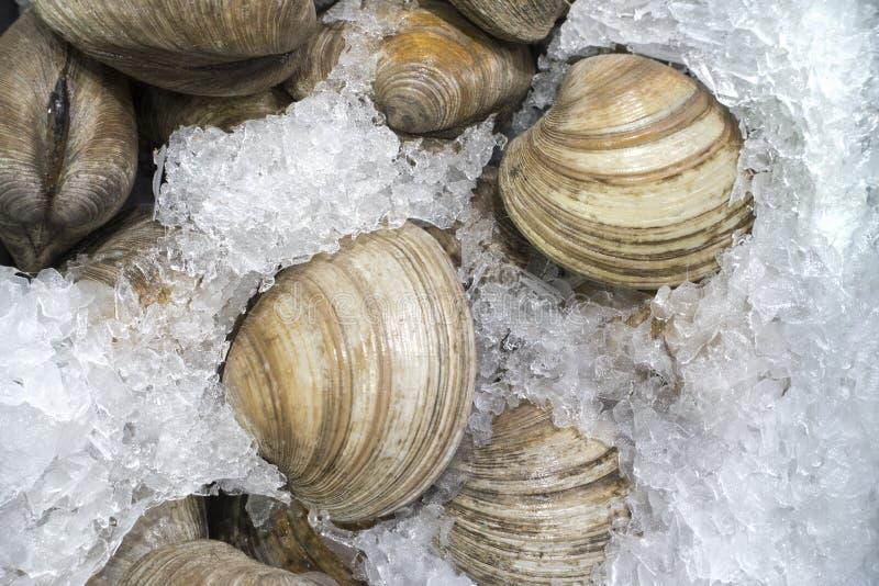 Verse tweekleppige schelpdieren op ijs voor verkoop bij de vissenmarkt stock foto