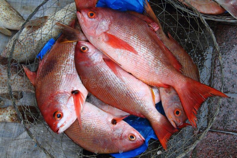 Verse vangst stock afbeeldingen