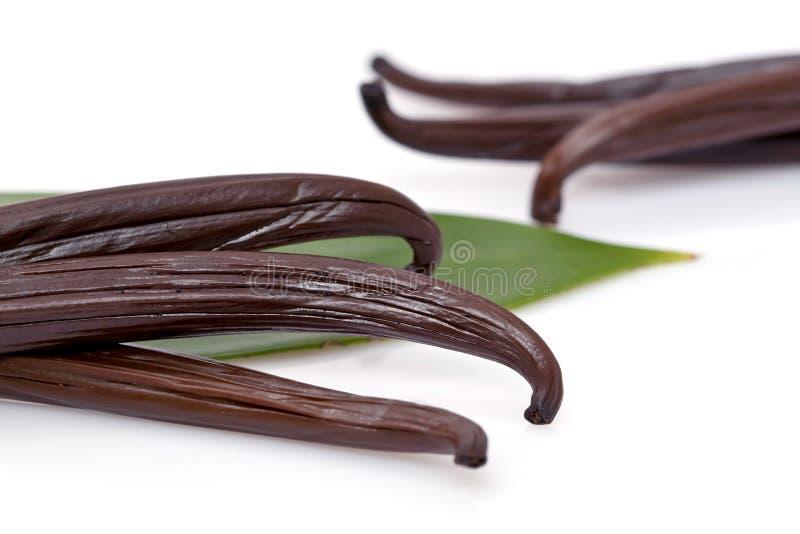 Verse vanille stock foto