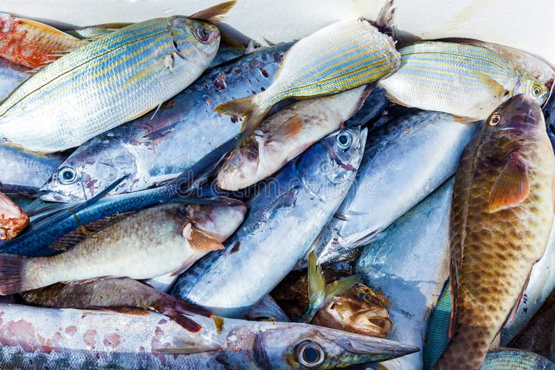 Verse vis te koop aangeboden royalty-vrije stock afbeeldingen