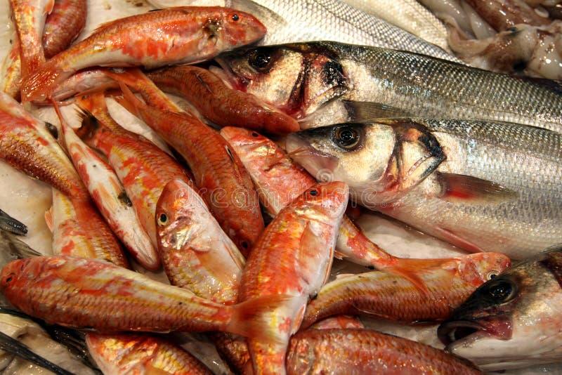 Verse Vissen stock foto
