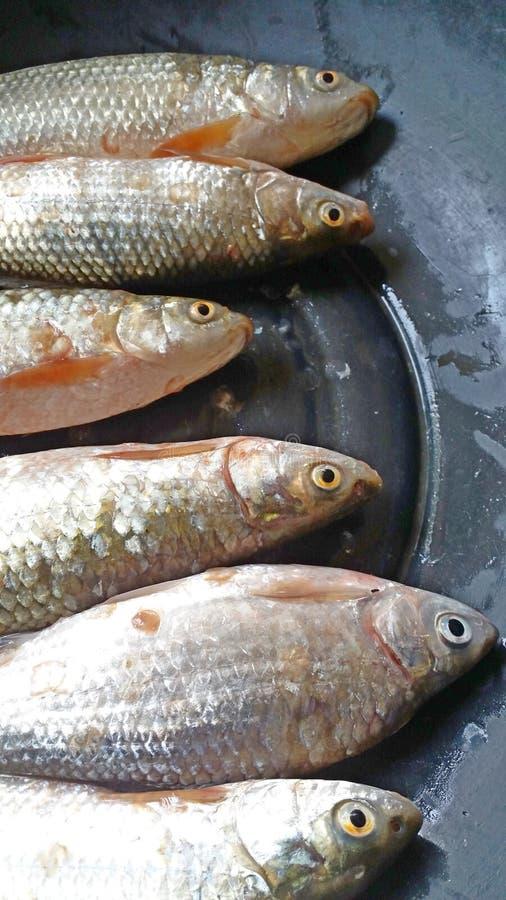 Verse Vissen royalty-vrije stock afbeeldingen