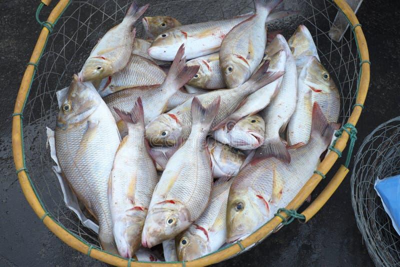 Verse vissen bij de Vissenmarkt van Doubai stock fotografie
