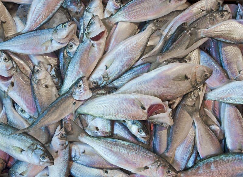 Verse vissen bij een markt royalty-vrije stock afbeeldingen