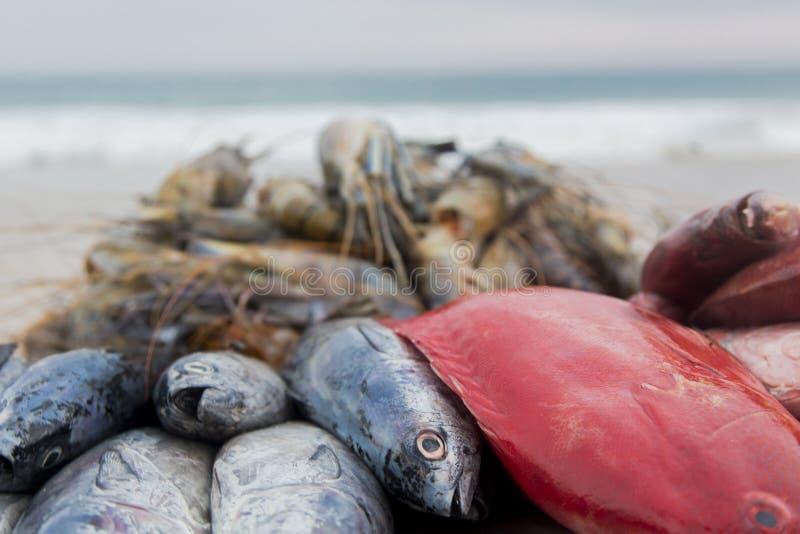Verse vissen op het strand stock foto's