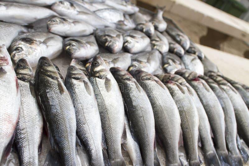 Verse vissen op markt royalty-vrije stock afbeeldingen