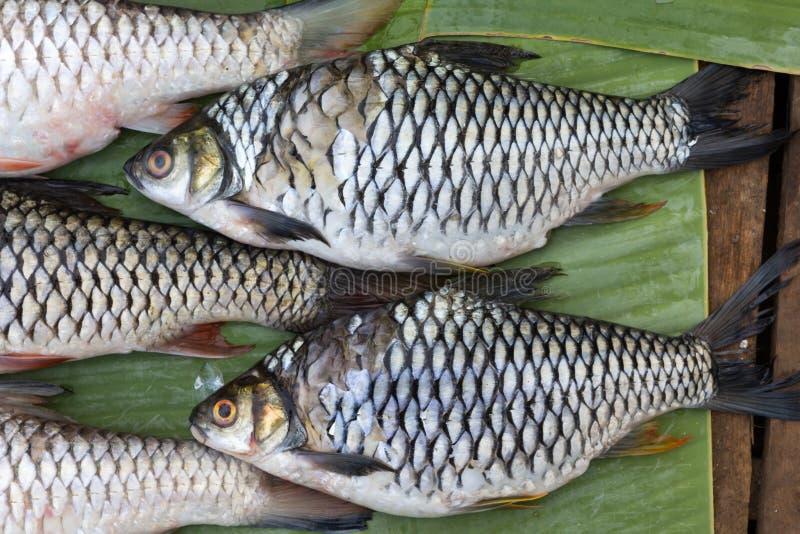 Verse vissen van de Mekong rivier stock foto's