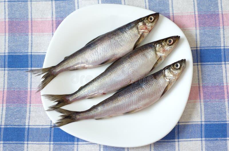 Verse vissen vendace op een witte plaat royalty-vrije stock afbeelding