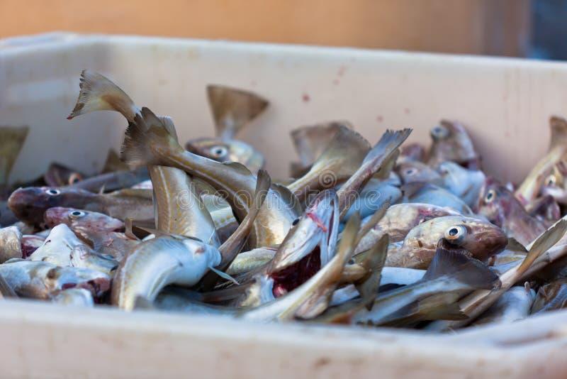 Verse Vissen in Verschepende Container stock fotografie