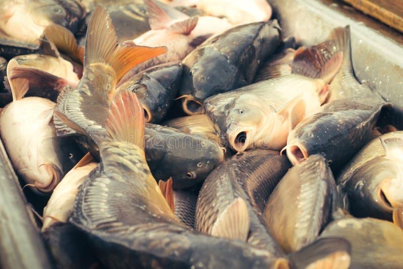 Verse vissenkarper royalty-vrije stock fotografie