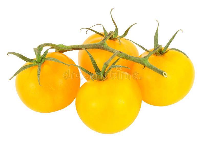 Verse Wijnstok Gerijpte Amber Tomatoes royalty-vrije stock afbeelding