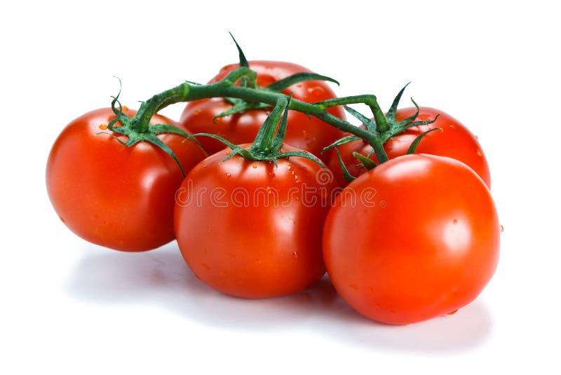Verse wijnstok gerijpte tomaten royalty-vrije stock afbeeldingen