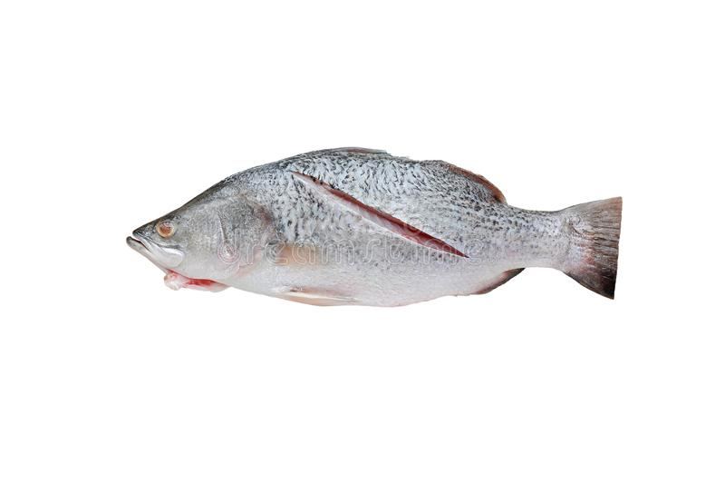 Verse witte die snapper vissen op witte achtergrond worden geïsoleerd stock afbeeldingen