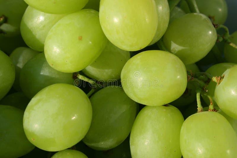 Verse witte druiven royalty-vrije stock foto