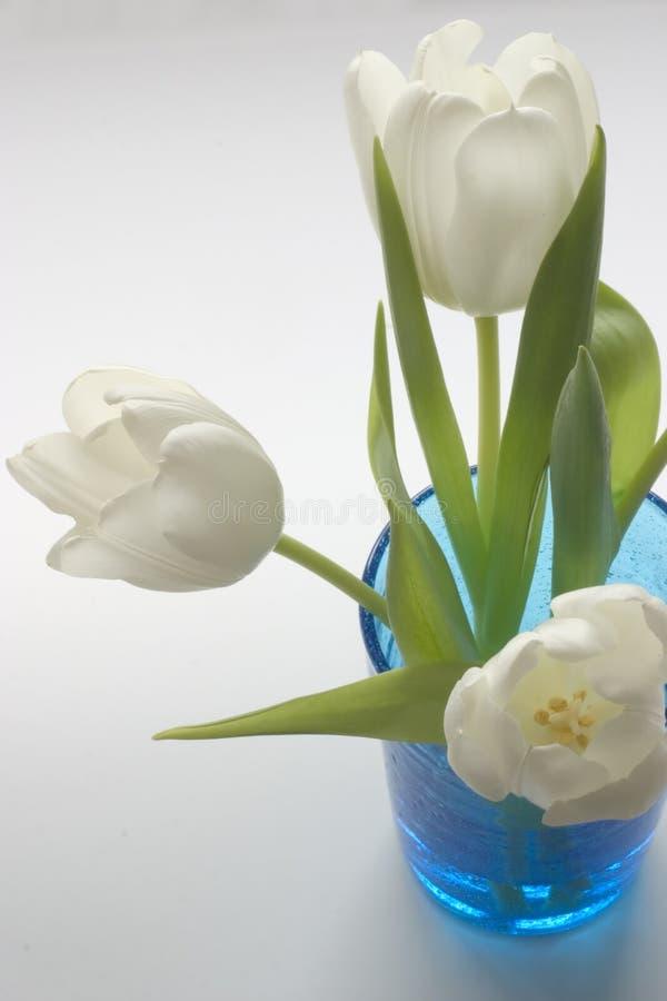 Verse Witte Tulpen in Blauw Glas royalty-vrije stock foto