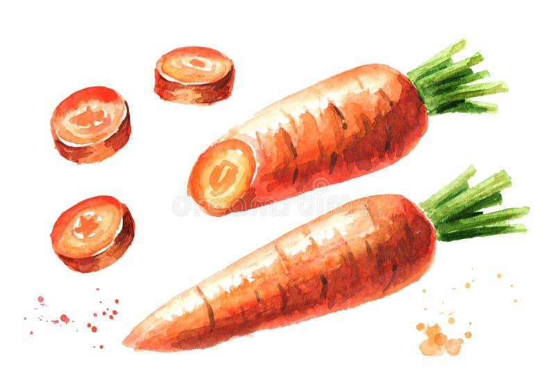 Verse wortel met gesneden geplaatste stukken Waterverfhand getrokken die illustratie, op witte achtergrond wordt geïsoleerd vector illustratie