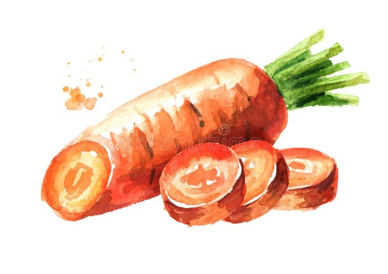 Verse wortel met gesneden stukken Waterverfhand getrokken die illustratie, op witte achtergrond wordt geïsoleerd royalty-vrije illustratie