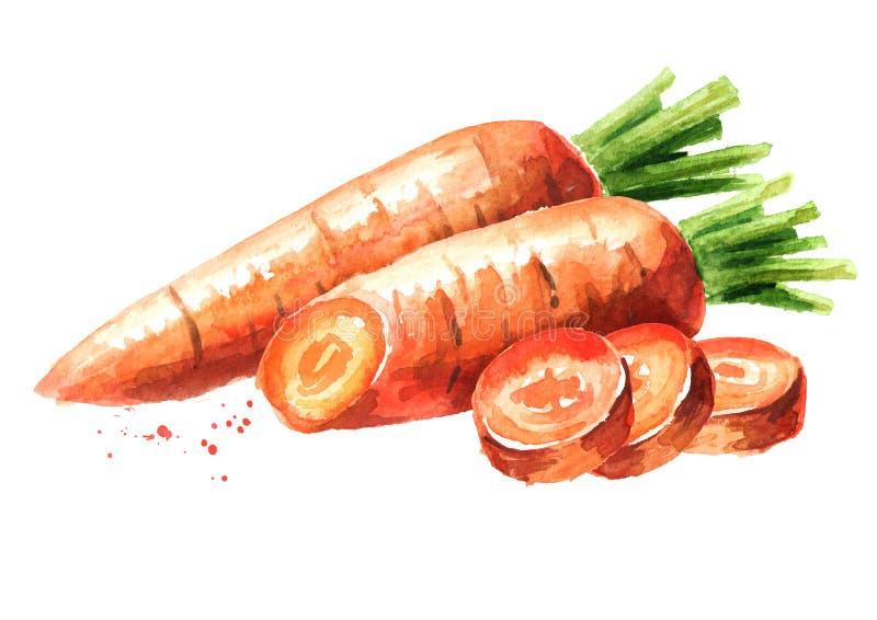 Verse wortel met gesneden stukken Waterverfhand getrokken die illustratie op witte achtergrond wordt geïsoleerd stock illustratie